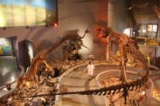 museo del desierto sedeturcoahuila.gob.mx